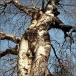 Forme mystérieuse dans la nature et arbre féérique