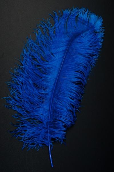 Plume autruche bleu